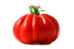 saftig röd tomat Arkivfoton