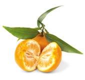 Saftig tangerin på en filial Royaltyfria Bilder