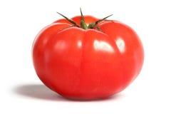 saftig tomat för lantbrukarhem Royaltyfria Bilder
