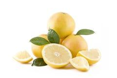 saftig white för grapefrukter Arkivbild
