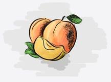 saftiga aprikosar vektor illustrationer