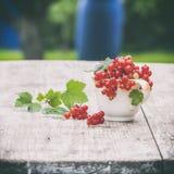 Saftiga bär av den rå röda vinbäret i en kopp på en trävit tabell Naturlig lampa sund begreppsmat Royaltyfri Fotografi
