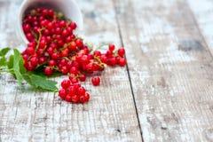 Saftiga bär av den rå röda vinbäret i en kopp på en trävit tabell Naturlig lampa sund begreppsmat Royaltyfria Foton