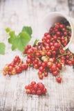 Saftiga bär av den rå röda vinbäret i en kopp på en trävit tabell Naturlig lampa sund begreppsmat Fotografering för Bildbyråer