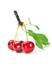 saftiga cherrys royaltyfria foton