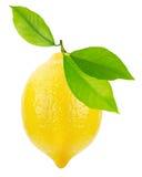 Saftiga citroner som isoleras på den vita bakgrunden Arkivbilder