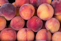 Saftiga mogna persikor Fotografering för Bildbyråer