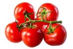 Saftiga nya tomater på en grön filial Arkivbild