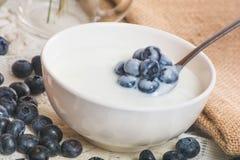 Saftiga och nya blåbär på skeden med yoghurt fotografering för bildbyråer