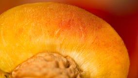 Saftiga och nya frukter Royaltyfri Foto