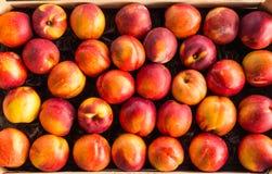 Saftiga persikor 2 Arkivfoto