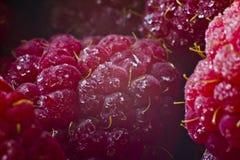 Saftiga röda hallon för makro Arkivfoto