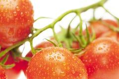 saftiga tomater Arkivbild