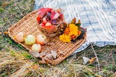 Saftige Äpfel auf einem Abtropfbrett, umgeben durch gefallenen Herbstlaub Schöne Niederlassung mit trockenem herum liegen Stockbilder