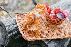 Saftige Äpfel auf einem Abtropfbrett, umgeben durch gefallenen Herbstlaub Schöne Niederlassung mit trockenem herum liegen fünf Stockfoto