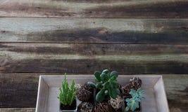 Saftige Anlagen auf Retro- Holztisch für Floristeninnenkonzept Lizenzfreie Stockfotografie