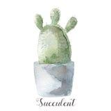 Saftige Anlagen des handgemalten Aquarells im Topf Vervollkommnen Sie für Karten, Aufkleber, Einladungen, Netz, Einklebebuch, Fli Stockfotografie