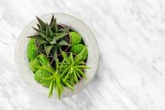 Saftige Anlagen im konkreten Pflanzer auf Marmorhintergrund Lizenzfreie Stockbilder