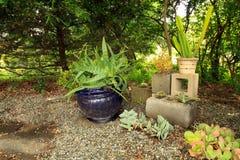 Saftige Anlagen innerhalb der Mittelblöcke in einem saftigen Garten lizenzfreies stockbild