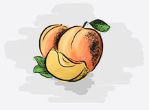 Saftige Aprikosen Stockbilder