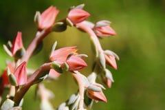 Saftige Blumenspirale in einem Garten stockfoto