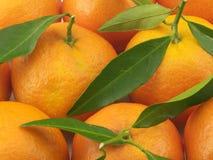 Saftige Mandarine Lizenzfreies Stockfoto