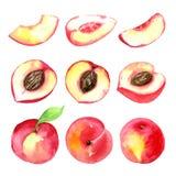 Saftige reife Pfirsiche Geschnittene Früchte lokalisiert auf weißem Hintergrund Gesunde Lebensmittelzeichnung des Sommers Von Han Stockfotos