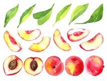 Saftige reife Pfirsiche Geschnittene Früchte lokalisiert auf weißem Hintergrund Gesunde Lebensmittelzeichnung des Sommers Von Han Stockbilder