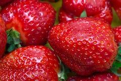 Saftige rote Erdbeeren Lizenzfreie Stockbilder
