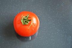 Saftige rote Tomate auf grauem Hintergrund stockfotos