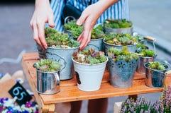 Saftige Töpfe am Blumenmarkt stockbild