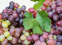 Saftige Weintraube auf einem weißen Hintergrund Stockbilder