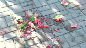 Saftige zertrümmerte Wassermelone gebrochen auf Pflastersteinen Stücke der Wassermelone auf dem Land stock footage