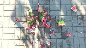 Saftige zertrümmerte Wassermelone gebrochen auf Pflastersteinen Stücke der Wassermelone auf dem Land stock video footage