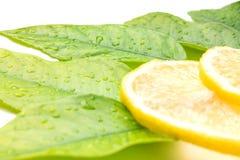 Saftige Zitrone und Zitroneblätter Lizenzfreies Stockfoto