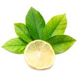 Saftige Zitrone und Zitroneblätter Lizenzfreie Stockfotografie