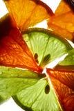 Saftige Zitrusfrucht stockfotografie