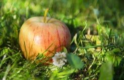 Saftiger Apfel im Gras Lizenzfreie Stockfotografie