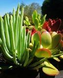 Saftiger Blumenstrauß Stockfotografie