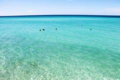 Saftiger Meerblick des Sommers Das karibische Meer mit Türkiswasser, im Abstand ein Streifen von tiefen blauen Blüten Lizenzfreie Stockbilder