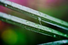 Saftiges grünes Gras Stockbild