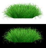 Saftiges grünes Gras auf lokalisiertem Hintergrund Stockfotos
