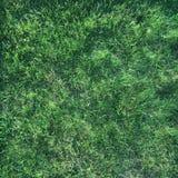 Saftiges grünes Gras in der Sonne im Sommer Lizenzfreie Stockbilder
