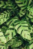 Saftiges Kontrastgrün lässt Hintergrund Stockfoto