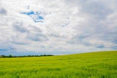 Saftiges Weizenfeld Lizenzfreies Stockbild