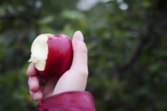 Saftigt äpple som bitas in i att rymmas i en hand arkivbild