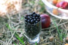 Saftigt exponeringsglas av den svarta vinbäret Energin av ett sunt bantar Arkivbilder