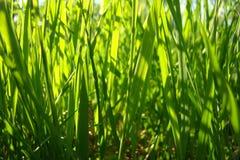 Saftigt grönt gräs för bakgrundsbild Arkivfoto