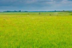 Saftigt grönt gräs i ett fält, över ett fält av ett moln för ett r Royaltyfria Foton