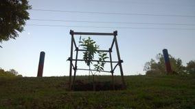 Safty av växten Arkivfoto
